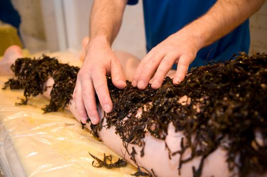 Ламинария для обертывания — живые водоросли